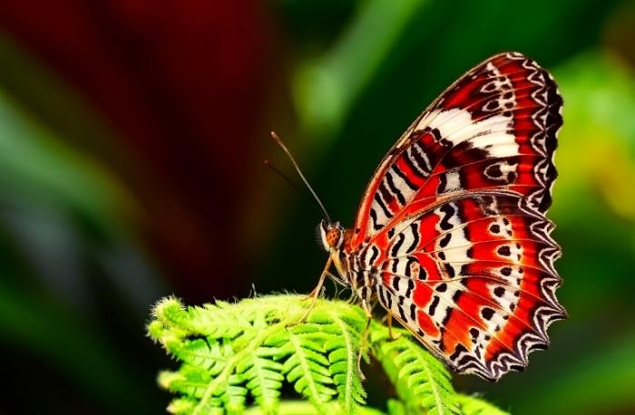 Babochka Butterfly 700x458 Бабочка   Butterfly