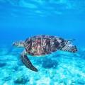 Черепаха в океане - Tortoise in the ocean