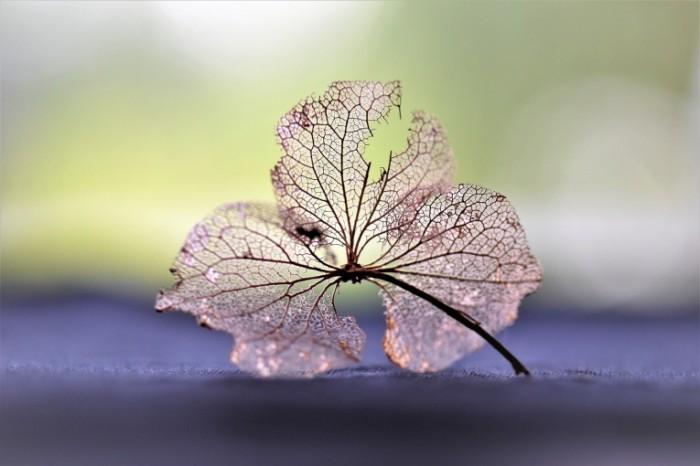 Listok dereva Tree leaf 700x466 Листок дерева   Tree leaf