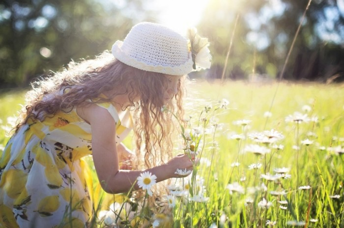 Malenkaya devochka sobiraet tsvetyi Little girl collects flowers 700x465 Маленькая девочка собирает цветы   Little girl collects flowers