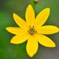 Желтый цветок - Yellow flower
