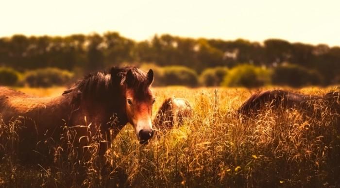 Loshadi v pole Horses in the field 700x387 Лошади в поле   Horses in the field