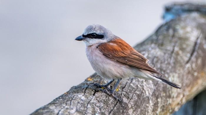 Ptitsa Bird 700x392 Птица   Bird
