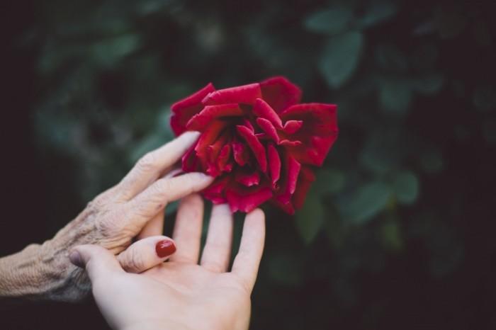Ruki roza Hands rose 700x466 Руки, роза   Hands, rose