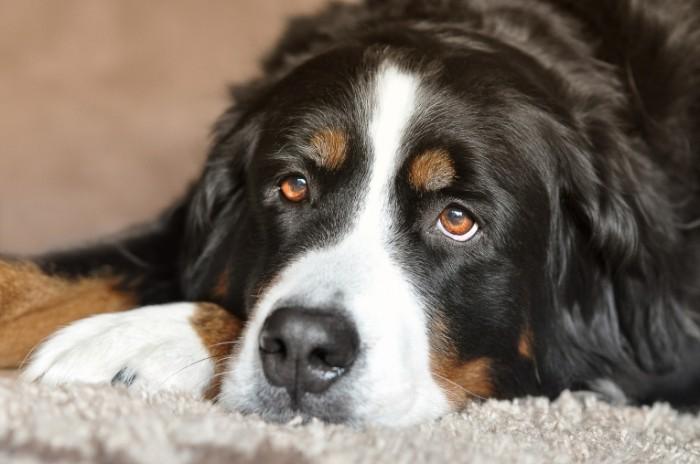 Sobaka Dog1 700x464 Собака   Dog