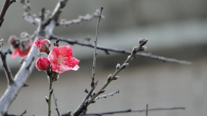 TSvetok vetki Flower branches 700x393 Цветок, ветки   Flower, branches