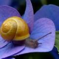Улитка - Snail