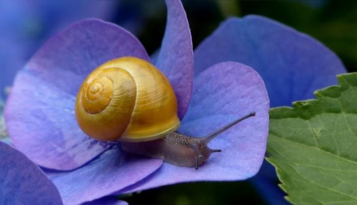 Ulitka Snail 700x403 Улитка   Snail