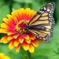 Бабочка, цветок - Butterfly, flower