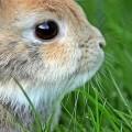 Кролик - Rabbit