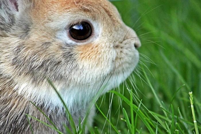 Krolik Rabbit 700x466 Кролик   Rabbit