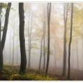 Лес, туман, осень - Forest, fog, autumn