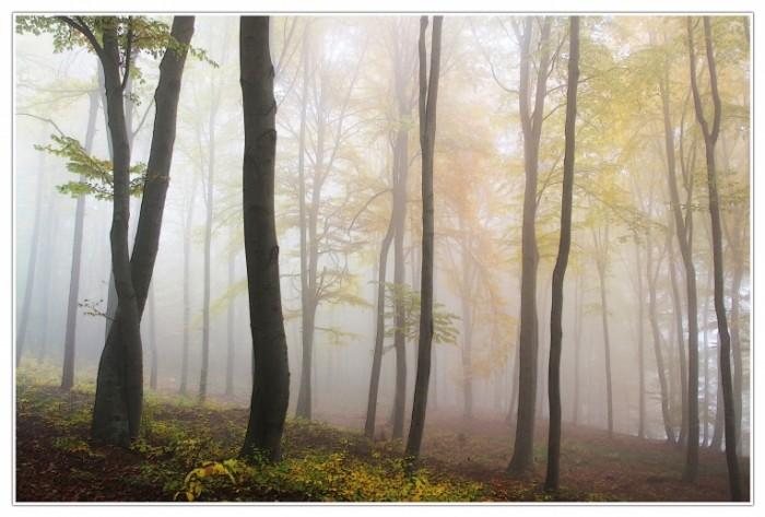 Les tuman osen Forest fog autumn 700x473 Лес, туман, осень   Forest, fog, autumn