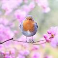 Птица, цветы - Bird, flowers