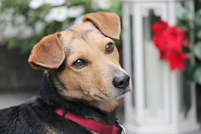 Sobaka Dog 700x466 Собака   Dog
