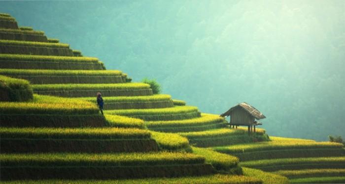 плантации   plantations