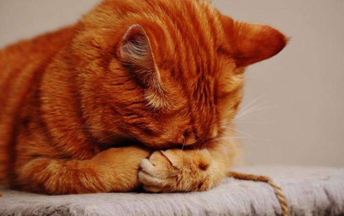 рыжий кот   Red headed cat