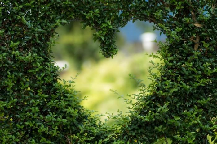 сердце в саду   heart in the garden