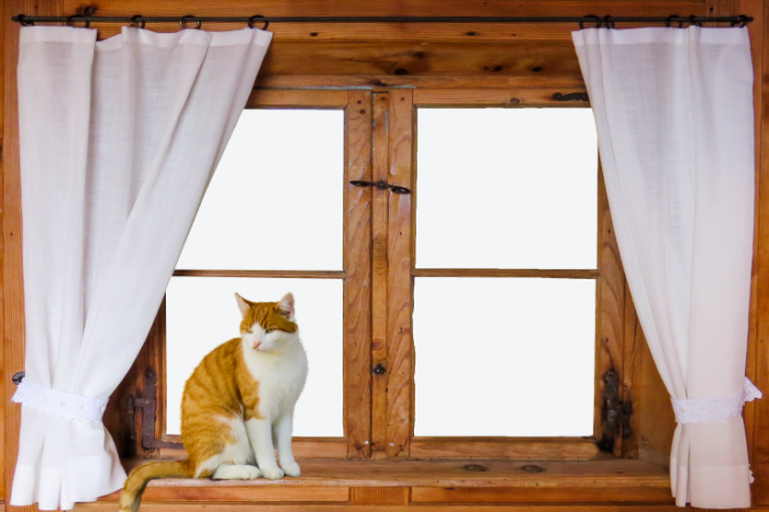 Kot okno Cat window 700x466 Кот, окно   Cat, window