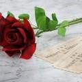 Красные розы - Red roses