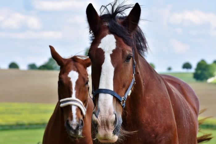 Loshadi Horses 700x466 Лошади   Horses