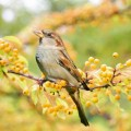 Птица - Bird