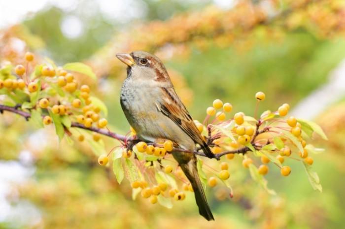 Ptitsa Bird 700x465 Птица   Bird