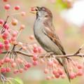 Птица, ягоды - Bird, berries