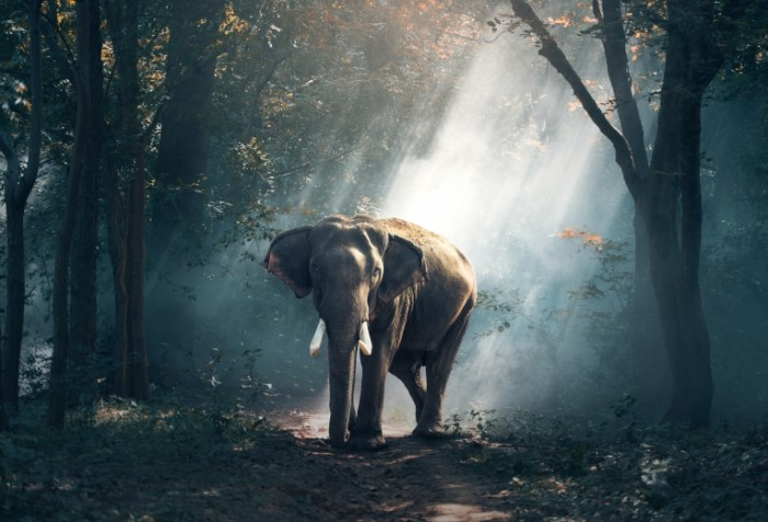 Slon Elephant 700x476 Слон   Elephant