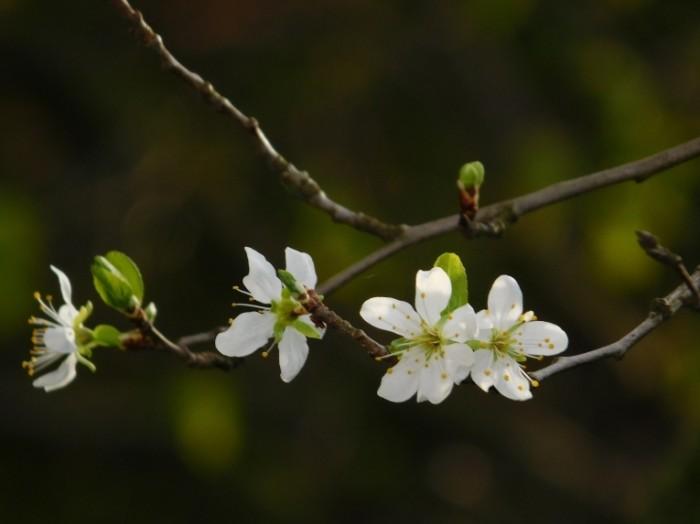 TSvetyi vesna Flowers spring 700x524 Цветы, весна   Flowers, spring