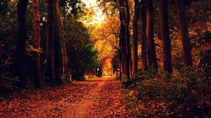 осень   autumn