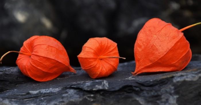 Cоцветие   Inflorescence