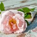Цветок - Flower