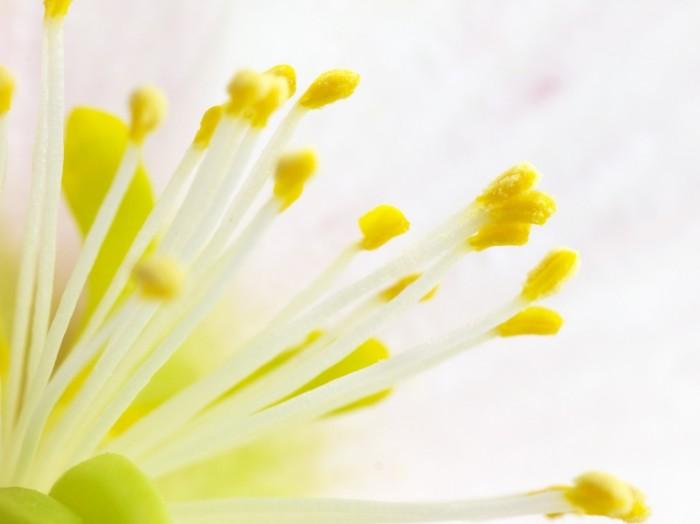 TSvetok Flower1 700x524 Цветок   Flower