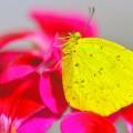 Бабочка - Butterfly