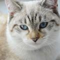 Кот - Cat