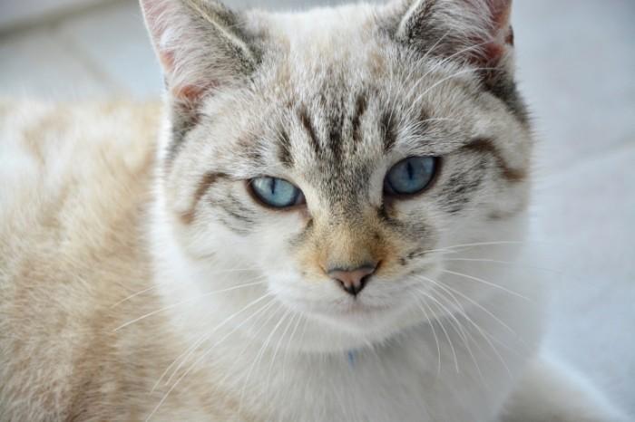 Kot Cat 700x466 Кот   Cat