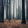 Лес, туман - Forest, fog