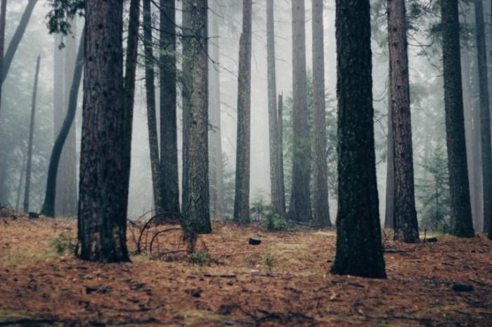 Les tuman Forest fog 700x465 Лес, туман   Forest, fog