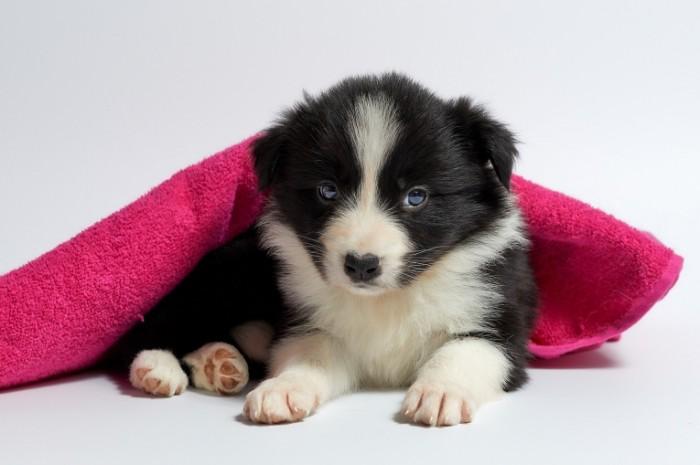 Milyiy shhenok Cute puppy 700x465 Милый щенок   Cute puppy
