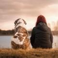 Природа, собака, озеро - Nature, dog, lake