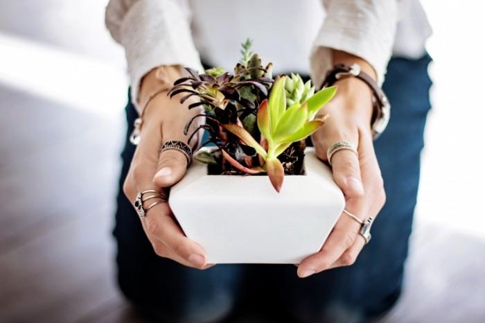 Dekorativnoe rastenie Decorative plant 6000  4000 700x466 Декоративное растение   Decorative plant
