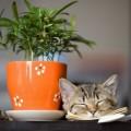 Кот, горшок, растение - Cat, pot, plant