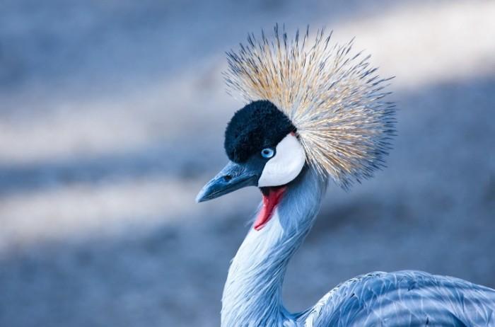 Ptitsa Bird 700x462 Птица   Bird