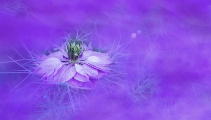 TSvetyi sirenevyie Flowers lilac 700x399 Цветы сиреневые   Flowers lilac