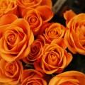 Желтые розы - Yellow roses