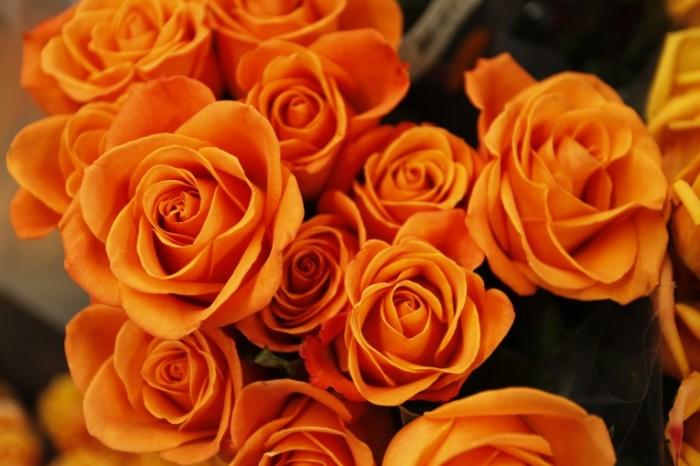 Желтые розы   Yellow roses