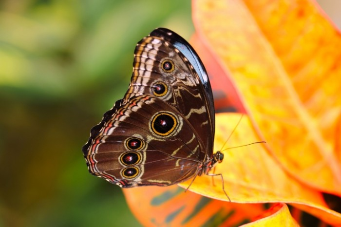 Babochka Butterfly 700x466 Бабочка   Butterfly