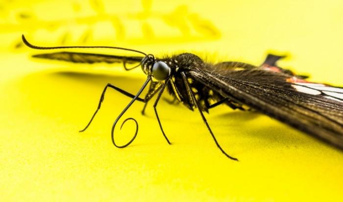 Babochka makro Butterfly macro 5520  3256 700x412 Бабочка, макро   Butterfly, macro