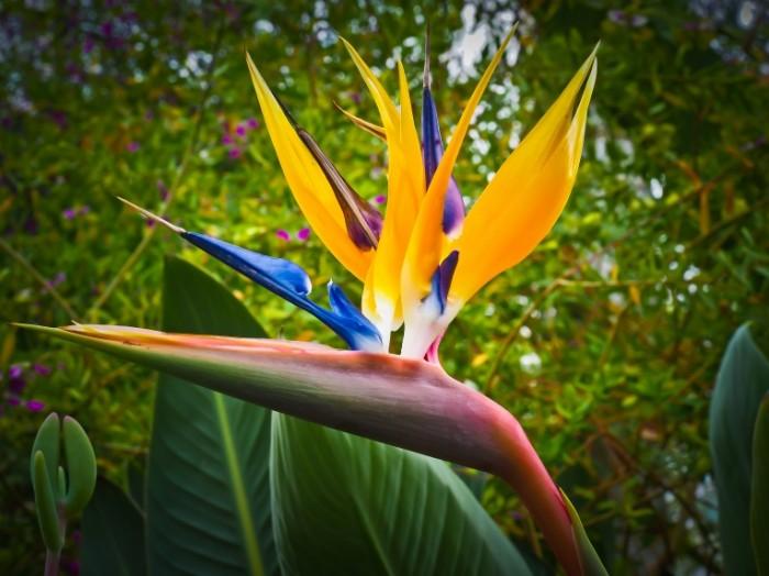 E`kzoticheskiy tsvetok Exotic flower 4608  3456 700x524 Экзотический цветок   Exotic flower